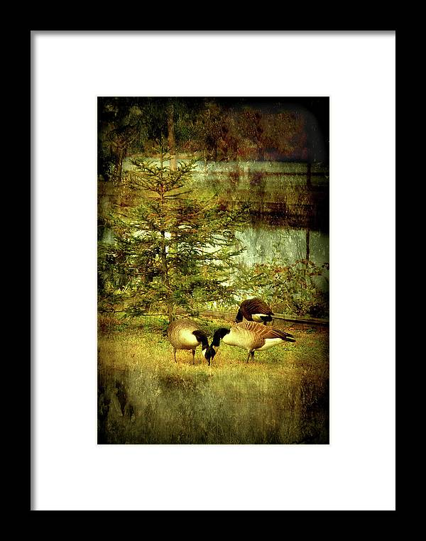 Autumn Framed Print featuring the photograph By The Little Tree - Lake Carasaljo by Angie Tirado