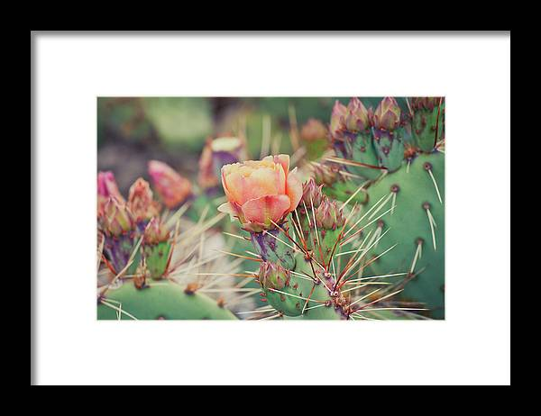 Orange Color Framed Print featuring the photograph Cactus Blossom by Harpazo hope
