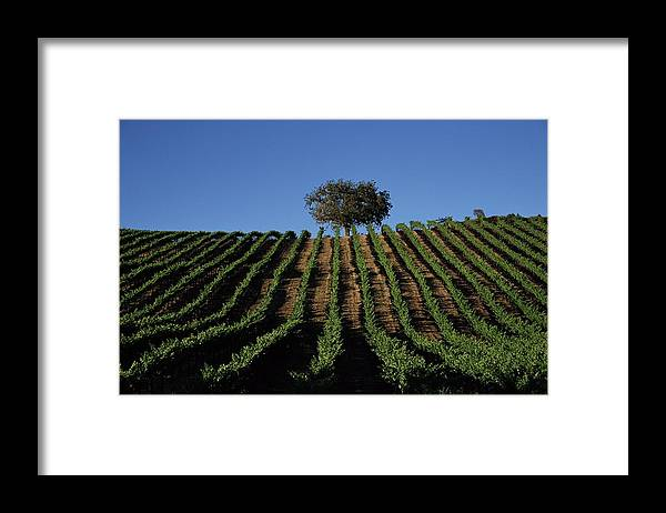 Following Framed Print featuring the photograph Californias Winegrape Growing Region Of by George Rose