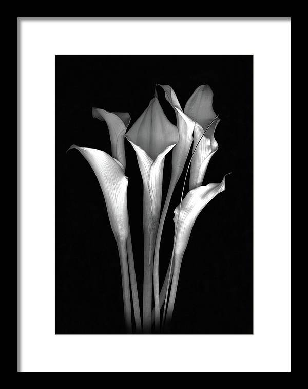 Calla Framed Print featuring the photograph Calla White and Black by Sandi F Hutchins