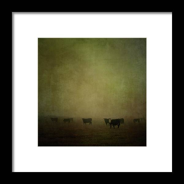 Pets Framed Print featuring the photograph Cattle In The Mist by Jill Ferry