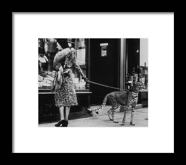 Pets Framed Print featuring the photograph Cheetah Who Shops by B. C. Parade