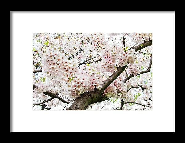 Outdoors Framed Print featuring the photograph Cherry Blossom by Sky Noir Photography By Bill Dickinson