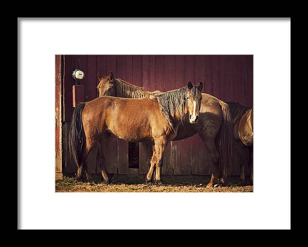 Horse Framed Print featuring the photograph Chestnut Horses by Thepalmer