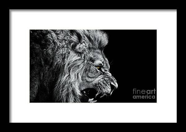 Big Cat Framed Print featuring the photograph Close-up Of Lion Roaring Against Black by Visuen Vengaroo / Eyeem