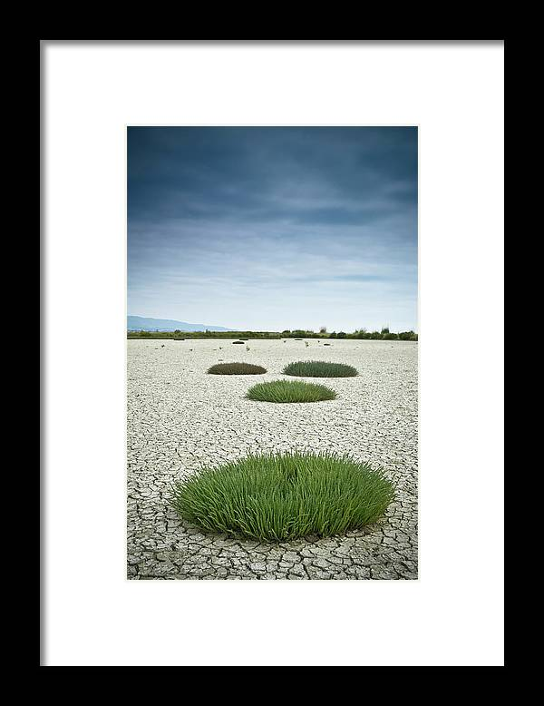 Grass Framed Print featuring the photograph Clumps Of Grass Growing Through Cracked by David Duchemin / Design Pics