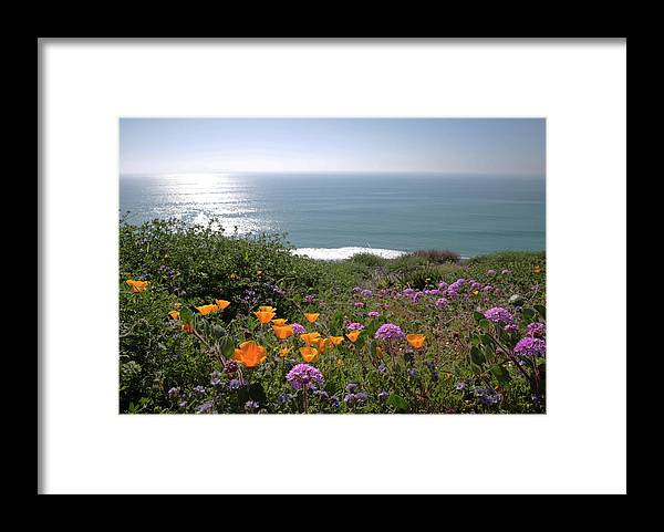 Wildflowers Framed Print featuring the photograph Coastal Bouquet by Robin Street-Morris