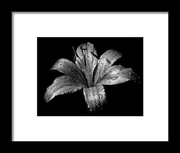 Black Background Framed Print featuring the photograph Collection by Photograph By Ryan Brady-toomey