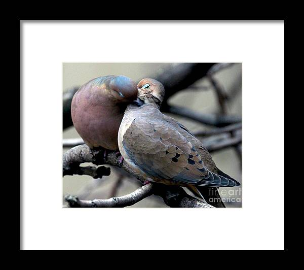 Female Mourning Dove Framed Print featuring the photograph Cooing Mourning Doves 2 by Patricia Youngquist