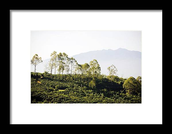 Outdoors Framed Print featuring the photograph Costa Rica, Alajuela, Coffee Plants At by Bob Stefko