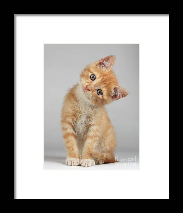 Fur Framed Print featuring the photograph Cute Little Kitten by Lana Langlois