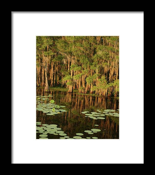Outdoors Framed Print featuring the photograph Cypress In The Lake by Jlfcapture