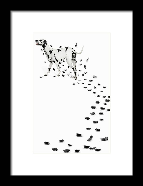 White Background Framed Print featuring the photograph Dalmation Losing Spots by Gandee Vasan