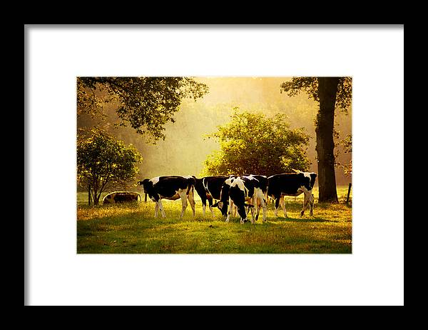 Grass Framed Print featuring the photograph De-light-ed Calves by Bob Van Den Berg Photography