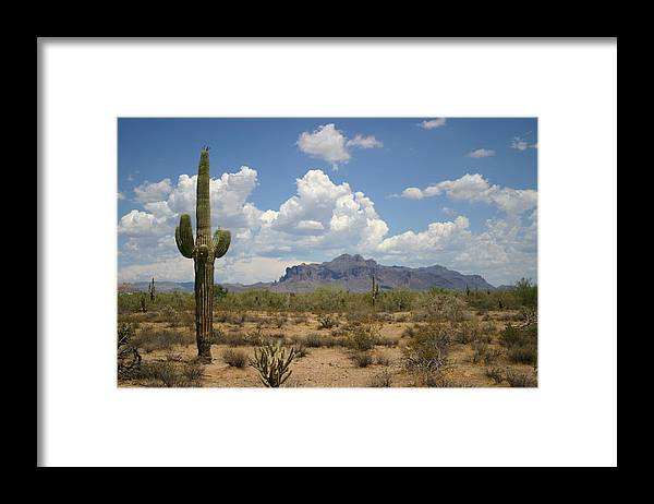 Saguaro Cactus Framed Print featuring the photograph Desert Landscape by Vlynder