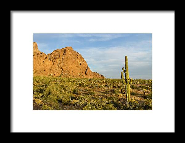 Geology Framed Print featuring the photograph Desert Mountain Cactus Classic by Photo By Chris Lemmen Www.chrislemmenphotography.ca