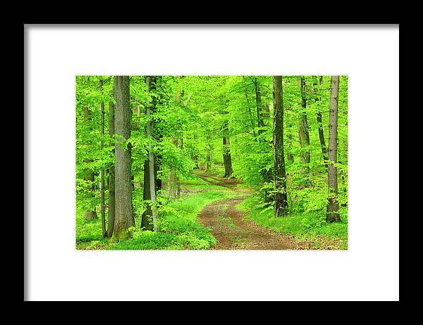 Environmental Conservation Framed Print featuring the photograph Dirt Road Through Lush Beech Tree by Avtg