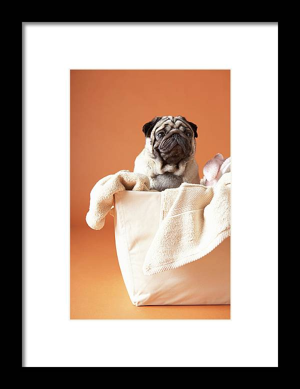 Pets Framed Print featuring the photograph Dog In Basket by Chris Amaral