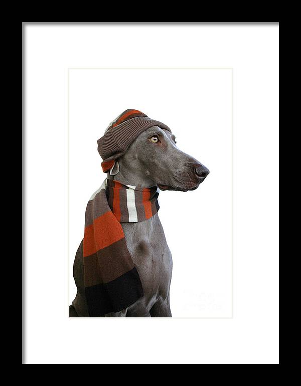 Pets Framed Print featuring the photograph Dog In Winter Look 2 by Lily Rosen - Zohar