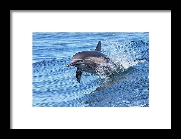 Wake Framed Print featuring the photograph Dolphin Riding Wake by Greg Boreham (treklightly)