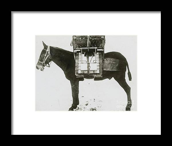 Technology Framed Print featuring the photograph Donkey Carrying Portable Telegraph by Bettmann