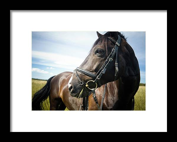 Horse Framed Print featuring the photograph Dont Look Back by Pixalot