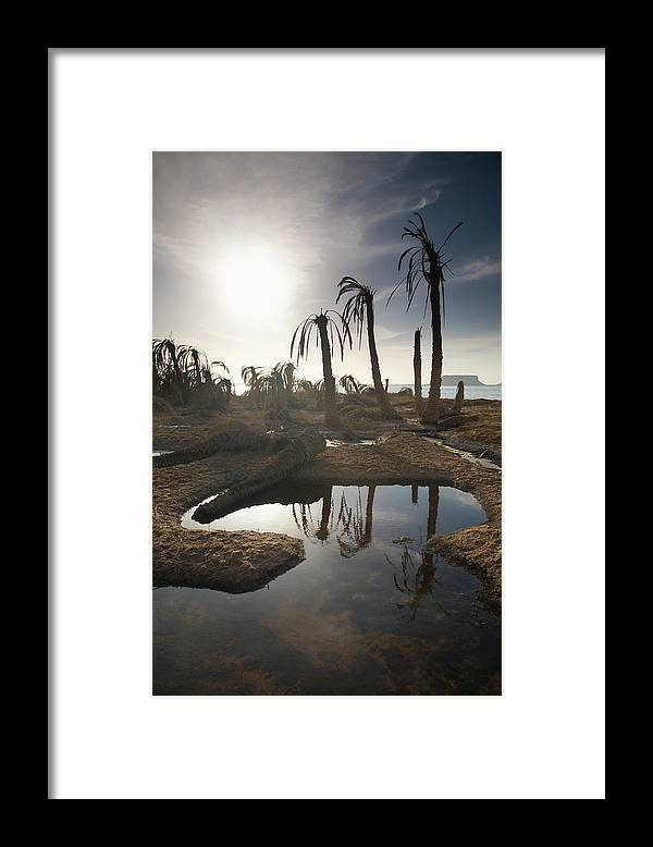 Scenics Framed Print featuring the photograph Dried Up Palm Trees And Salt Water On by Sean White / Design Pics