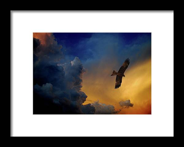 Animal Themes Framed Print featuring the photograph Eagle Over The Top by Gopan G Nair