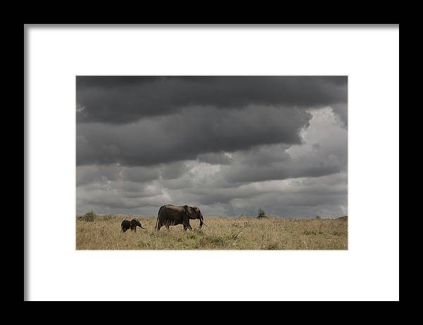 Kenya Framed Print featuring the photograph Elephant Under Cloudy Sky by Buena Vista Images