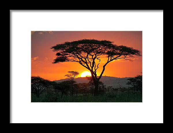 Scenics Framed Print featuring the photograph End Of A Safari-day In The Serengeti by Guenterguni