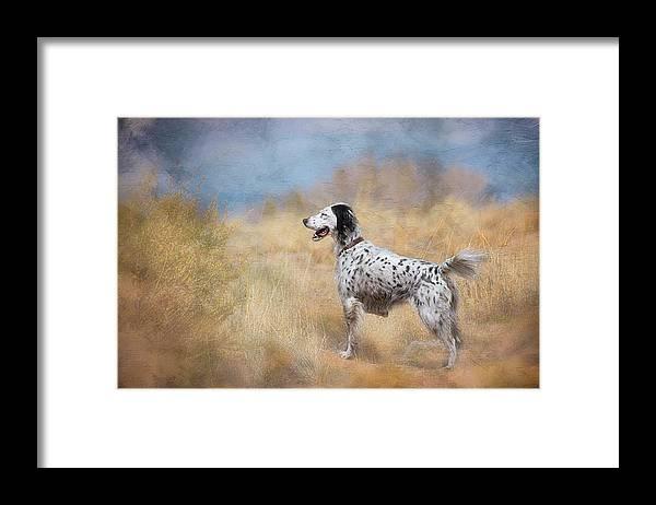 Digital Art Framed Print featuring the photograph English Setter Dog by Zayne Diamond Photographic
