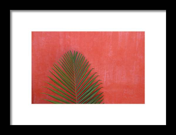 Recreational Pursuit Framed Print featuring the photograph Exotic Background by Lucgillet