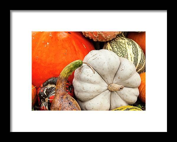 Season Framed Print featuring the photograph Fall Season Squash And Pumpkins by M Timothy O'keefe