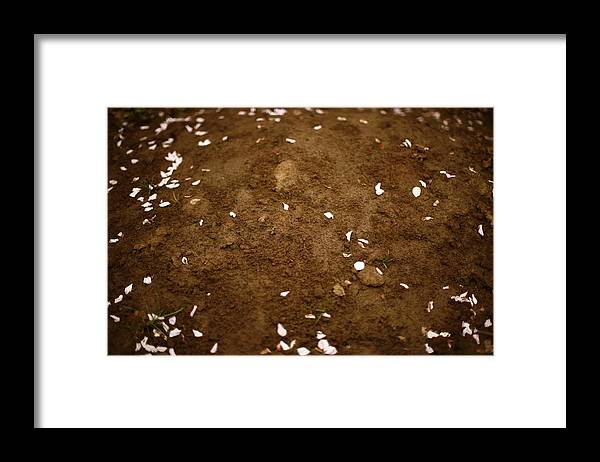 Outdoors Framed Print featuring the photograph Fallen Apple Blossoms On Mound Of Soil by Matt Niebuhr