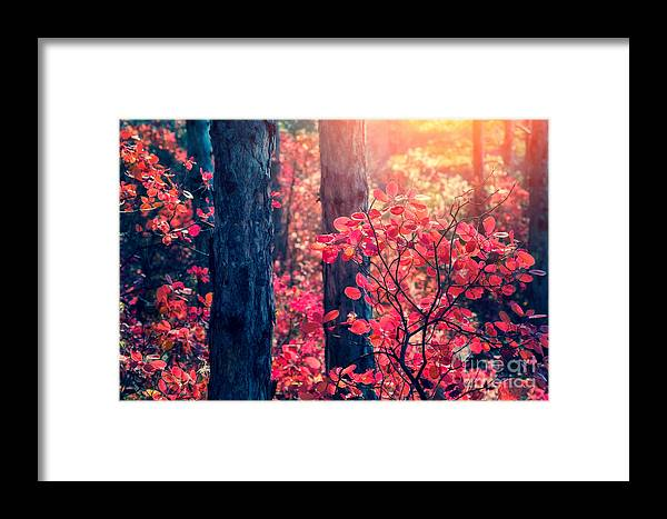 Magic Framed Print featuring the photograph Fantastic Forest With Cotinus by Creative Travel Projects