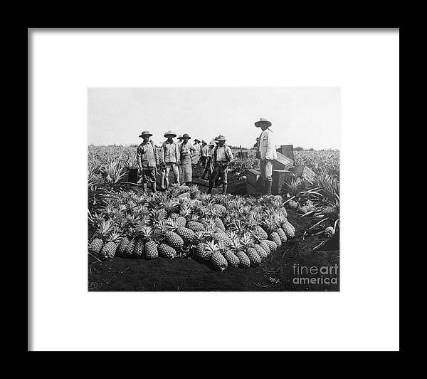 Farm Worker Framed Print featuring the photograph Farm Workers Beside Pineapple Stack by Bettmann