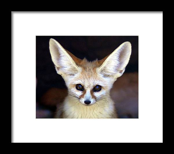 Alertness Framed Print featuring the photograph Fennec Fox by Floridapfe From S.korea Kim In Cherl