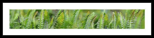 Photography Framed Print featuring the photograph Fern Scape by Cora Niele
