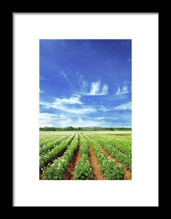 Scenics Framed Print featuring the photograph Field by Lisegagne