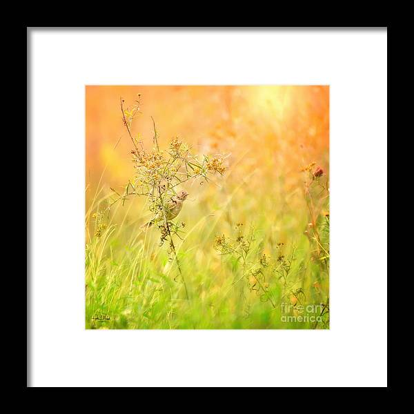 Aves Framed Print featuring the photograph Field Sparrow by Heather Hubbard