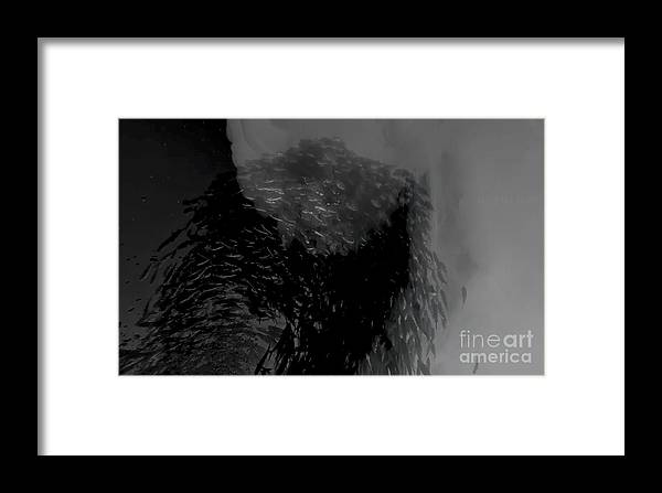 Fish Framed Print featuring the digital art Fish And Smoke Part2 by Ekaterina Moskalyuk