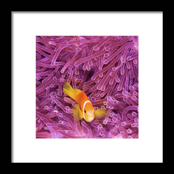 Underwater Framed Print featuring the photograph Fish by Extreme-photographer