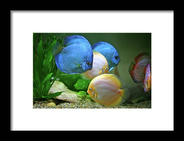 Underwater Framed Print featuring the photograph Fish In Water by Vietnam