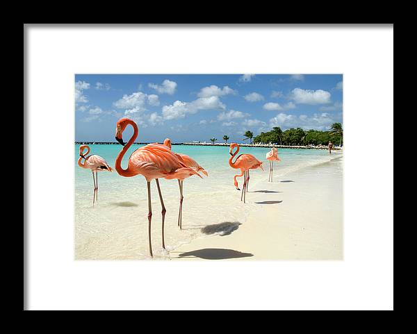 Shadow Framed Print featuring the photograph Flamingos On The Beach by Vanwyckexpress