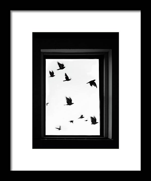 Spooky Framed Print featuring the photograph Flock Of Crows Seen Through A Window by Grant Faint