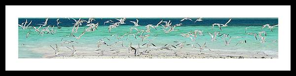 Scenics Framed Print featuring the photograph Flock Of Seagulls By Azure Beach by Christopher Leggett