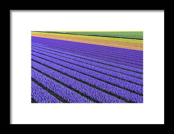 Tranquility Framed Print featuring the photograph Flower Fields In Spring In Holland by Frans Sellies