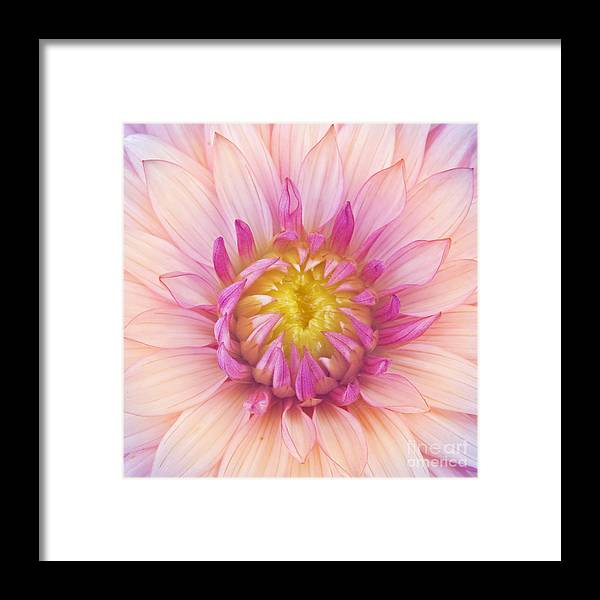 Big Framed Print featuring the photograph Flower Macro by Danielo