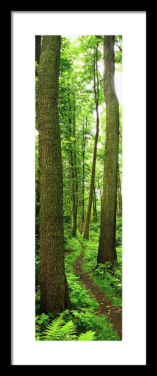 Scenics Framed Print featuring the photograph Footpath Between The Trees by Tomchat