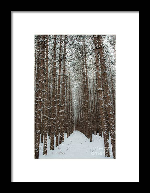Sleeping Bear Dunes Framed Print featuring the photograph Forest In Sleeping Bear Dunes In January by Twenty Two North Photography